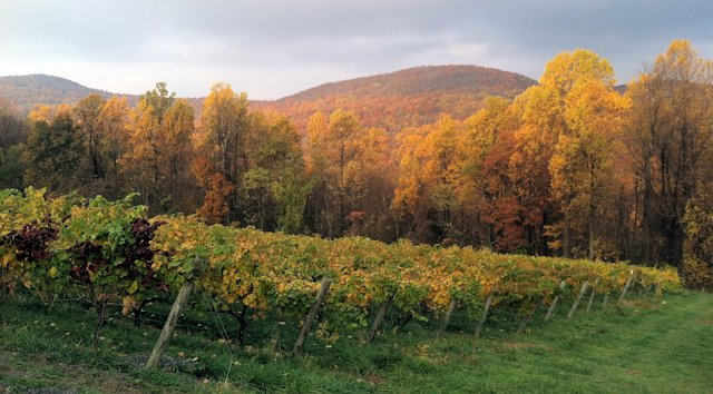 Chester Gap Vineyards