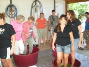 Grape Stomping at Wisteria Farm and Vineyard
