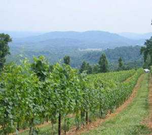 Chester Gap Vineyard