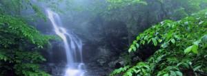 Discover Shenandoah's Natural Beauty