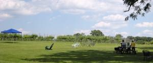 people at vineyard
