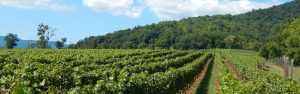 Quiveremont Winery