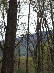 Create your dream property on a stunning 25 acre lot!